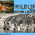 Wildlife Photography Editing Services