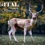 Digital Photo Editing services